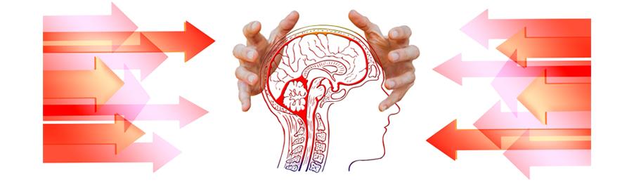 Stress im Gehirn